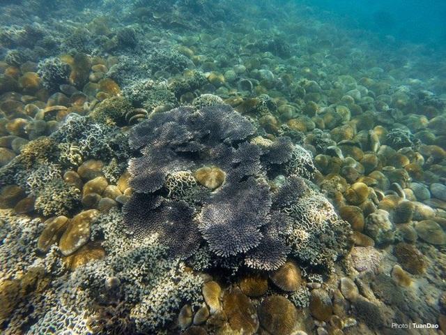6 vùng biển lặn ngắm san hô đẹp nhất Việt Nam: Rực rỡ đến mê đắm lòng người - Ảnh 8.