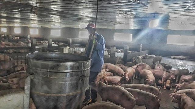 Nông dân không có phần trong lãi khủng của doanh nghiệp kinh doanh lợn - Ảnh 1.
