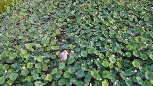Biến đồng hoang thành đầm sen, nông dân thu hàng chục triệu mỗi vụ - Ảnh 1.