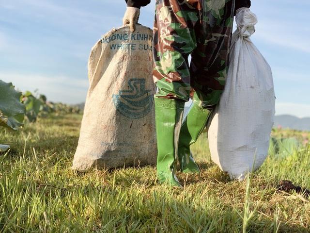 Biến đồng hoang thành đầm sen, nông dân thu hàng chục triệu mỗi vụ - Ảnh 14.
