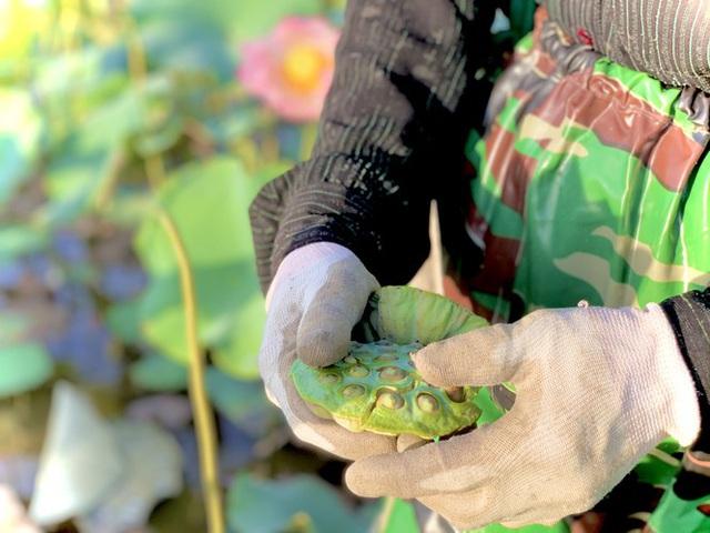 Biến đồng hoang thành đầm sen, nông dân thu hàng chục triệu mỗi vụ - Ảnh 18.