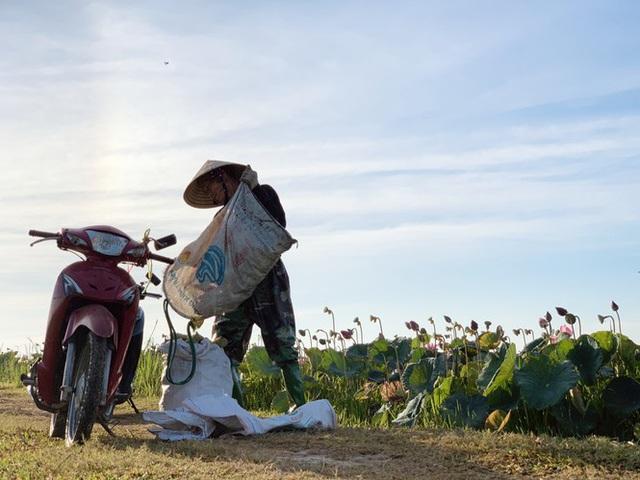 Biến đồng hoang thành đầm sen, nông dân thu hàng chục triệu mỗi vụ - Ảnh 20.