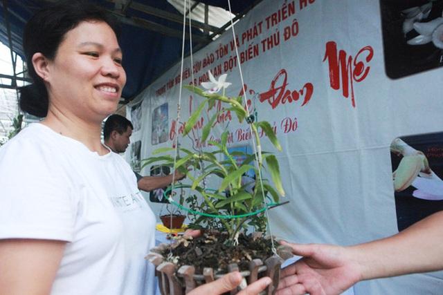 Đại gia Hà Nội chi mạnh 5 tỷ đồng mua giò lan đột biến nhìn như... ngọn rau muống - Ảnh 3.