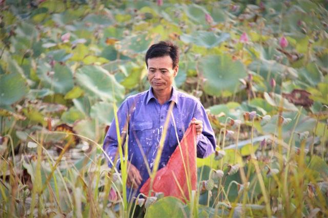 Biến đồng hoang thành đầm sen, nông dân thu hàng chục triệu mỗi vụ - Ảnh 4.