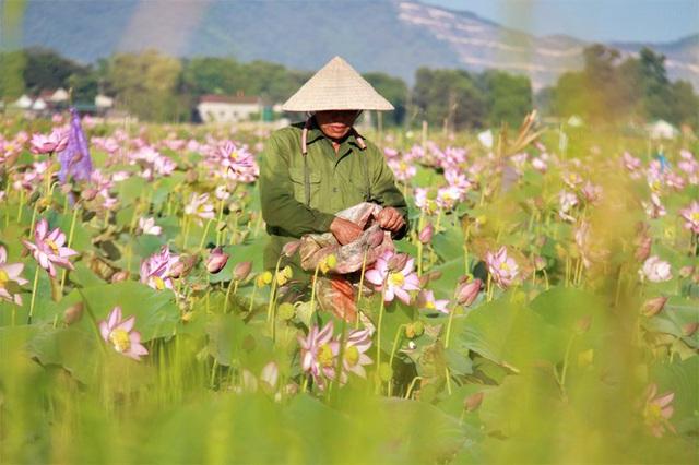 Biến đồng hoang thành đầm sen, nông dân thu hàng chục triệu mỗi vụ - Ảnh 9.
