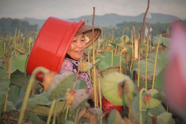 Biến đồng hoang thành đầm sen, nông dân thu hàng chục triệu mỗi vụ - Ảnh 10.