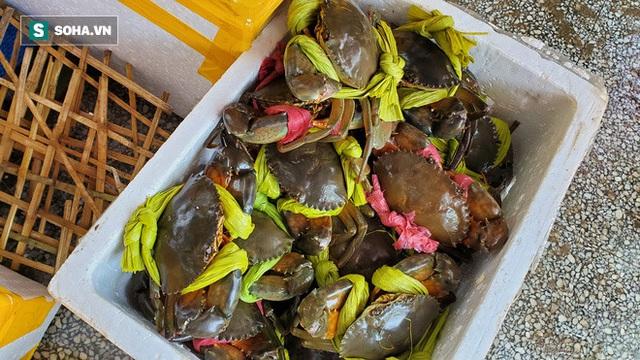 Chen chân mua hải sản giảm sốc 50%, tôm hùm 640.000 đồng/kg, ghẹ xanh 500.000 đồng/kg - Ảnh 11.