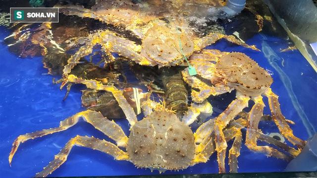 Chen chân mua hải sản giảm sốc 50%, tôm hùm 640.000 đồng/kg, ghẹ xanh 500.000 đồng/kg - Ảnh 13.