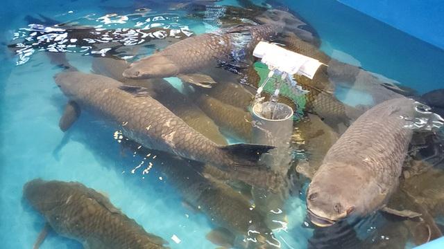 Chen chân mua hải sản giảm sốc 50%, tôm hùm 640.000 đồng/kg, ghẹ xanh 500.000 đồng/kg - Ảnh 14.