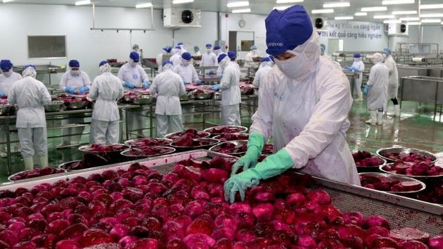 Nguồn sống của hàng triệu nông dân Việt Nam gặp khó, làm sao tìm cơ trong nguy? - Ảnh 2.
