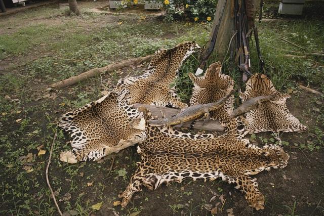 Đầu tư của TQ: Kẽ hở khiến động vật hoang dã bị săn lùng từ châu Phi đến Nam Mỹ - Ảnh 2.