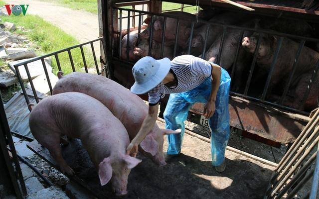 Chợ lợn lớn nhất miền Bắc đìu hiu, ế ẩm - Ảnh 11.