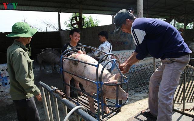 Chợ lợn lớn nhất miền Bắc đìu hiu, ế ẩm - Ảnh 14.