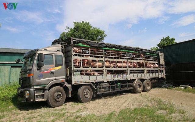 Chợ lợn lớn nhất miền Bắc đìu hiu, ế ẩm - Ảnh 4.