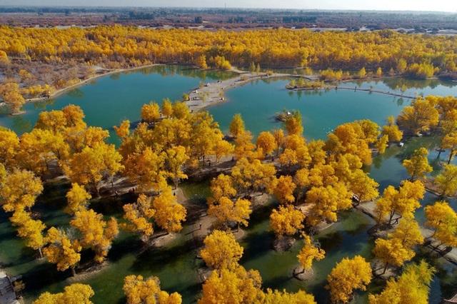 40 năm cặm cụi trồng rừng nơi cát sỏi, người phụ nữ biến hoang mạc thành thiên đường 10 vạn cây xanh - Ảnh 4.