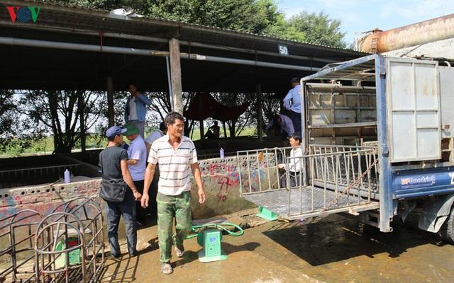 Chợ lợn lớn nhất miền Bắc đìu hiu, ế ẩm - Ảnh 7.