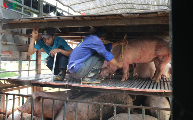 Chợ lợn lớn nhất miền Bắc đìu hiu, ế ẩm - Ảnh 9.