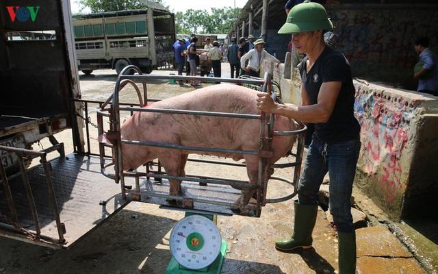Chợ lợn lớn nhất miền Bắc đìu hiu, ế ẩm - Ảnh 10.