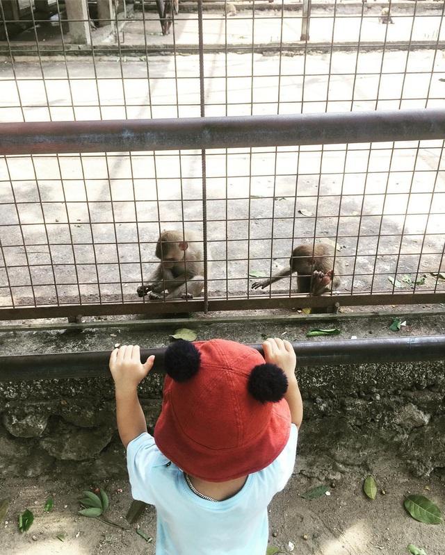 3 vườn thú safari ở Việt Nam: Tận mắt chiêm ngưỡng thế giới hoang dã với giá cực phải chăng, phù hợp với các gia đình có con nhỏ  - Ảnh 3.