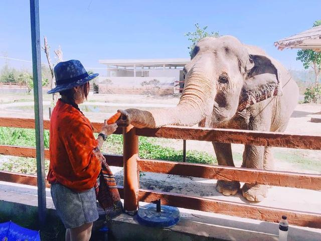 3 vườn thú safari ở Việt Nam: Tận mắt chiêm ngưỡng thế giới hoang dã với giá cực phải chăng, phù hợp với các gia đình có con nhỏ  - Ảnh 9.