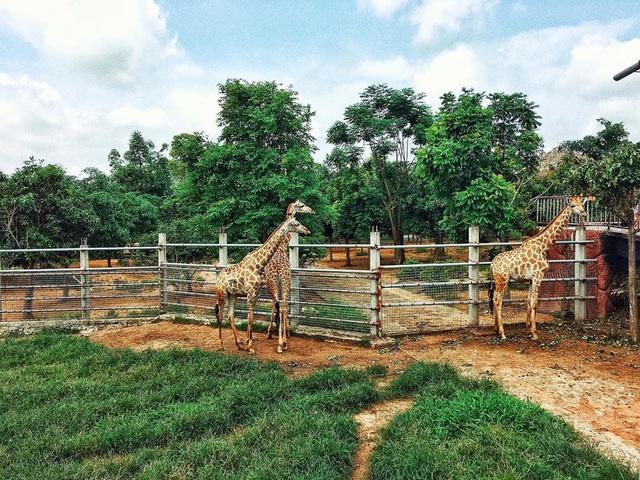 3 vườn thú safari ở Việt Nam: Tận mắt chiêm ngưỡng thế giới hoang dã với giá cực phải chăng, phù hợp với các gia đình có con nhỏ  - Ảnh 1.