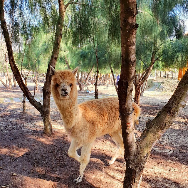 3 vườn thú safari ở Việt Nam: Tận mắt chiêm ngưỡng thế giới hoang dã với giá cực phải chăng, phù hợp với các gia đình có con nhỏ  - Ảnh 7.