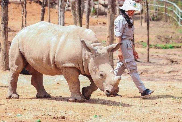 3 vườn thú safari ở Việt Nam: Tận mắt chiêm ngưỡng thế giới hoang dã với giá cực phải chăng, phù hợp với các gia đình có con nhỏ  - Ảnh 10.