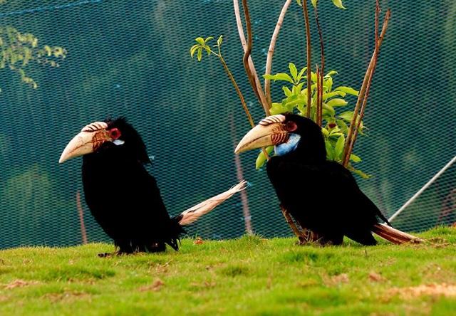 3 vườn thú safari ở Việt Nam: Tận mắt chiêm ngưỡng thế giới hoang dã với giá cực phải chăng, phù hợp với các gia đình có con nhỏ  - Ảnh 5.