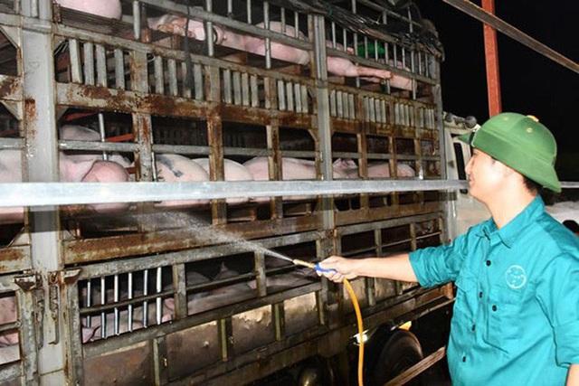 Dự kiến nhập khẩu 1,9 triệu heo thịt Thái Lan - Ảnh 1.