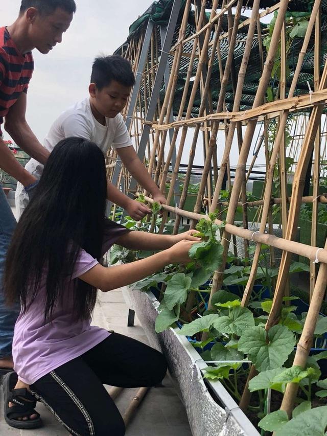 Đầm sen trên sân thượng 300m2 giữa lòng Sài Gòn: Ông chủ tự tay làm từ A-Z, chi phí chỉ 50 triệu  - Ảnh 14.