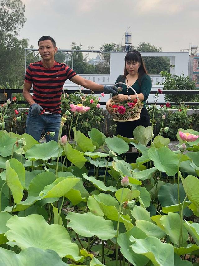 Đầm sen trên sân thượng 300m2 giữa lòng Sài Gòn: Ông chủ tự tay làm từ A-Z, chi phí chỉ 50 triệu  - Ảnh 18.