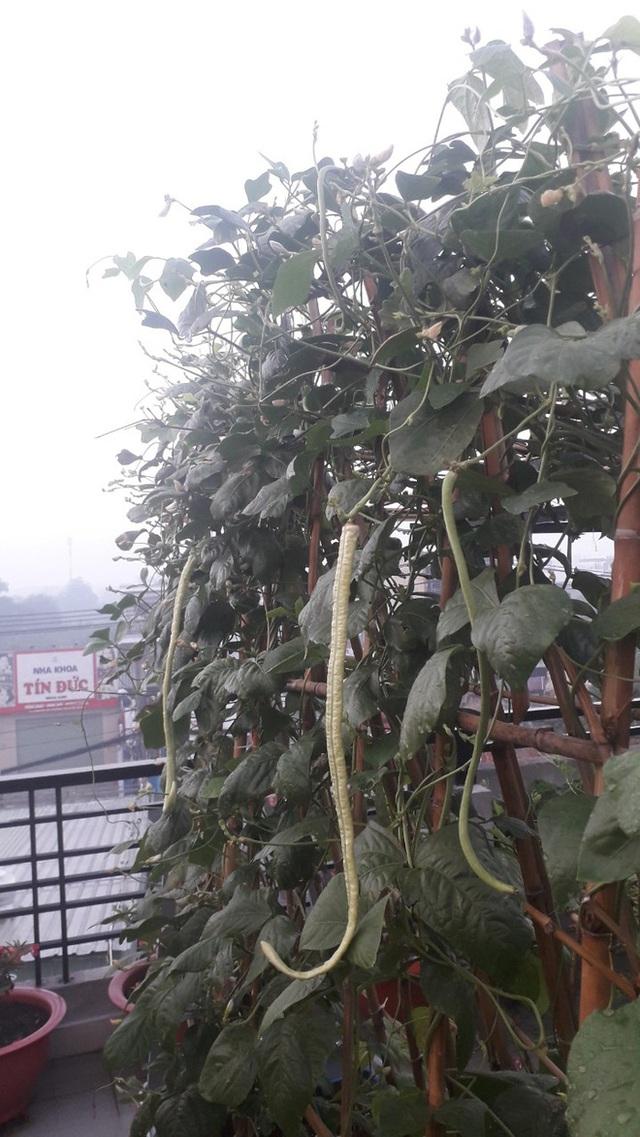 Đầm sen trên sân thượng 300m2 giữa lòng Sài Gòn: Ông chủ tự tay làm từ A-Z, chi phí chỉ 50 triệu  - Ảnh 10.