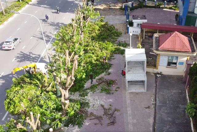 Hàng loạt cây xanh ở thành phố Vinh bị cắt trụi trong nắng nóng đỉnh điểm - Ảnh 1.