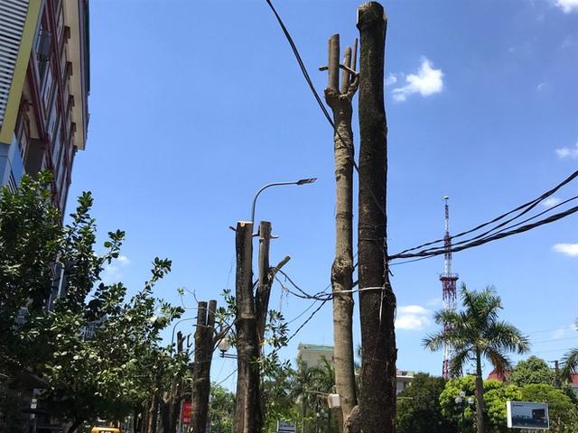 Hàng loạt cây xanh ở thành phố Vinh bị cắt trụi trong nắng nóng đỉnh điểm - Ảnh 11.