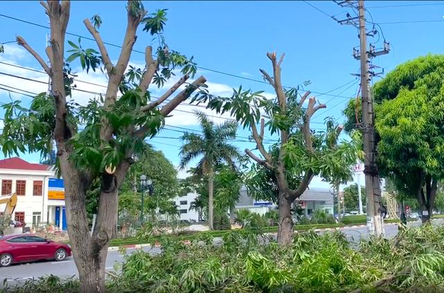 Hàng loạt cây xanh ở thành phố Vinh bị cắt trụi trong nắng nóng đỉnh điểm - Ảnh 3.