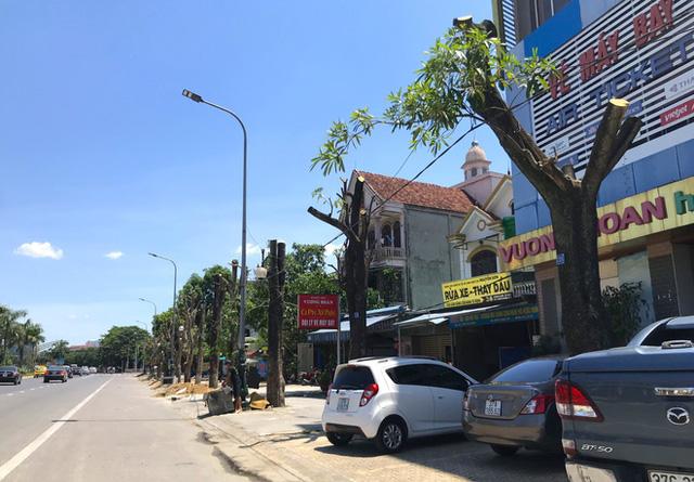 Hàng loạt cây xanh ở thành phố Vinh bị cắt trụi trong nắng nóng đỉnh điểm - Ảnh 4.
