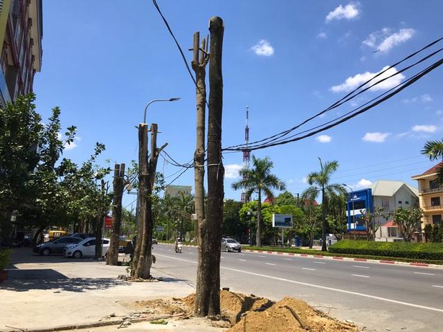 Hàng loạt cây xanh ở thành phố Vinh bị cắt trụi trong nắng nóng đỉnh điểm - Ảnh 5.