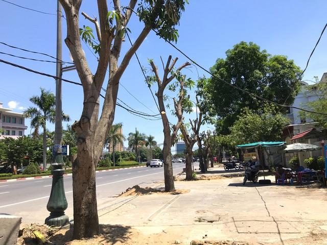 Hàng loạt cây xanh ở thành phố Vinh bị cắt trụi trong nắng nóng đỉnh điểm - Ảnh 6.