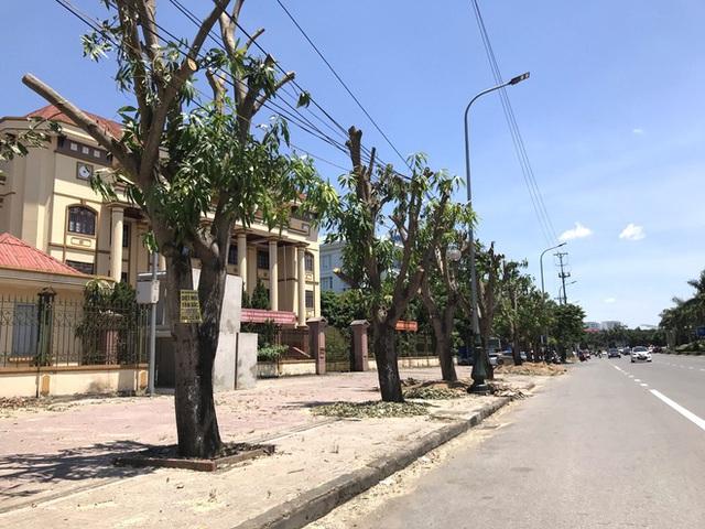 Hàng loạt cây xanh ở thành phố Vinh bị cắt trụi trong nắng nóng đỉnh điểm - Ảnh 8.