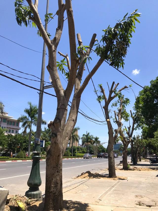 Hàng loạt cây xanh ở thành phố Vinh bị cắt trụi trong nắng nóng đỉnh điểm - Ảnh 9.