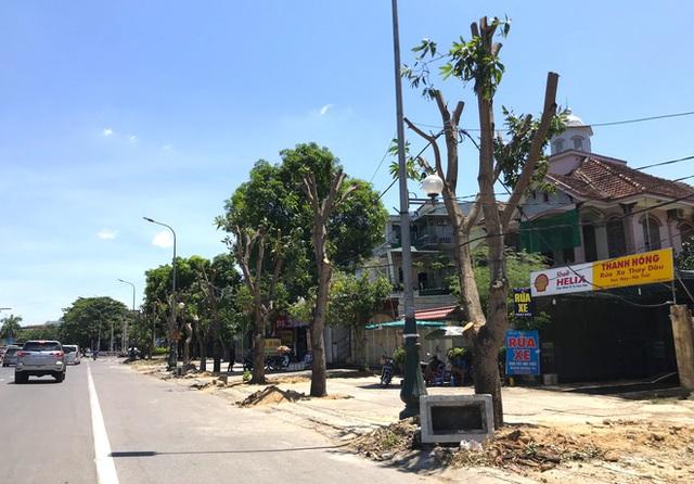 Hàng loạt cây xanh ở thành phố Vinh bị cắt trụi trong nắng nóng đỉnh điểm - Ảnh 10.