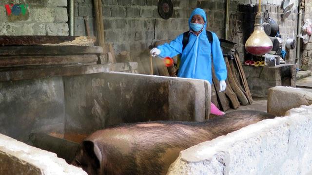 Dịch tả lợn châu Phi trở lại, nông dân Lai Châu trắng tay khi tái đàn - Ảnh 2.