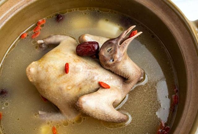 Đây là loài vật bổ gấp 9 lần thịt gà, được mệnh danh là thuốc bổ thượng phẩm giúp phụ nữ hồi xuân và miễn dịch nhiều loại bệnh - Ảnh 4.
