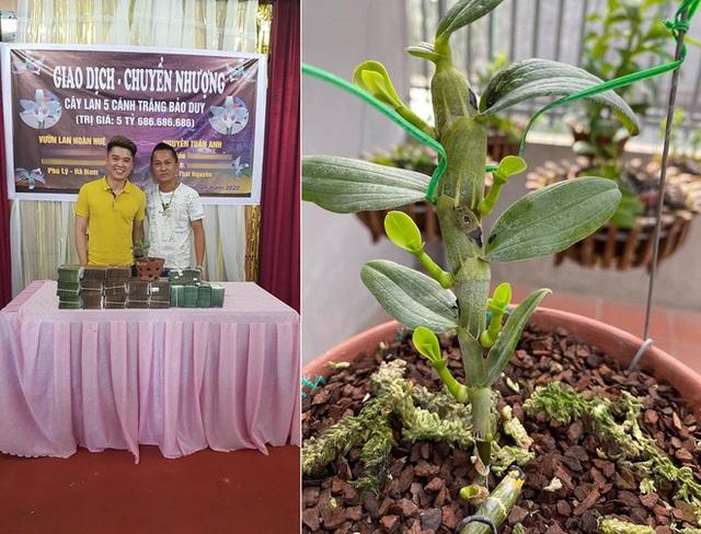Chiêm ngưỡng cây lan Bảo Duy 5 cánh trắng giá 5,6 tỷ đồng của đại gia Thái Nguyên - Ảnh 1.