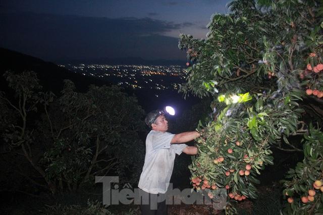 Vải thiều vào chính vụ, nông dân thu hoạch thâu đêm - Ảnh 1.