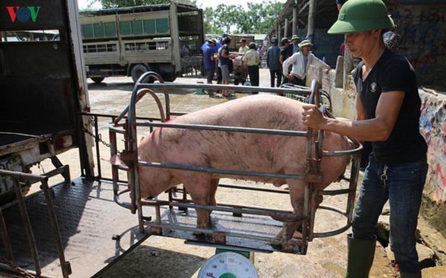 Thực hư chuyện lợn sống nhập khẩu từ Thái Lan về Việt Nam có chất cấm - Ảnh 1.