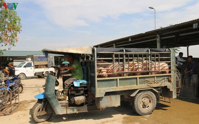Thực hư chuyện lợn sống nhập khẩu từ Thái Lan về Việt Nam có chất cấm - Ảnh 2.