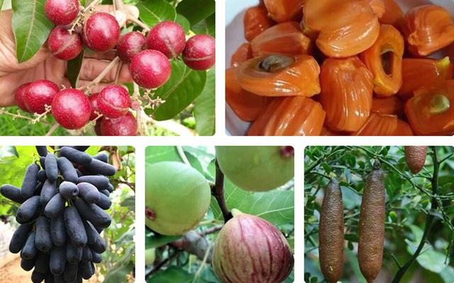 """Những giống cây ăn quả siêu năng suất khiến nông dân """"phát sốt"""" - Ảnh 1."""