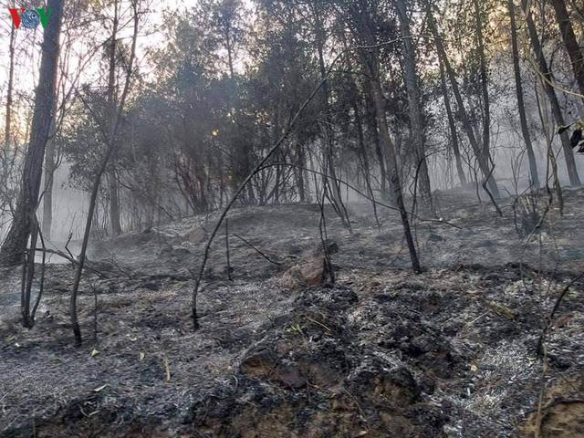 """Những cánh rừng thông """"chết đứng"""" sau những trận cháy kinh hoàng - Ảnh 3."""