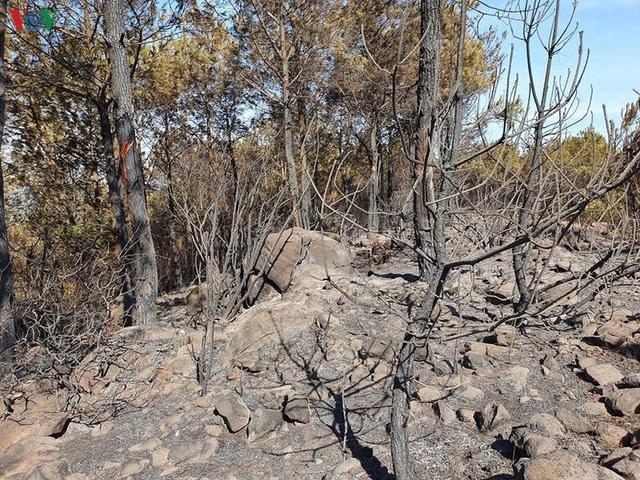 """Những cánh rừng thông """"chết đứng"""" sau những trận cháy kinh hoàng - Ảnh 4."""